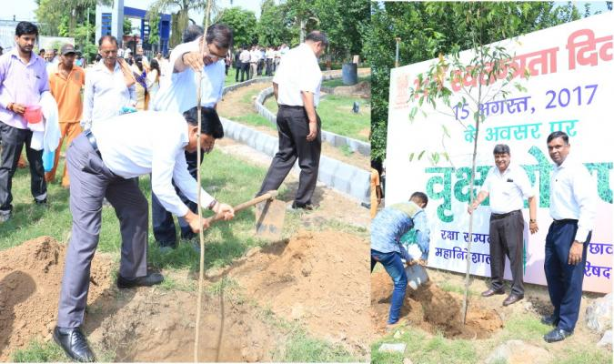 Tree Plantation Drive being carried out by Officers of DGDE